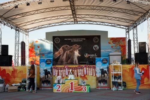 Фестиваль домашних животных «Верные друзья», Геленджик 2019